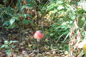 paddenstoelen 2