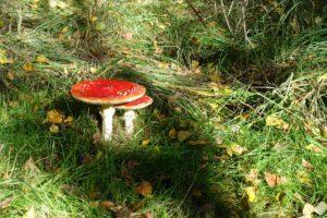 paddenstoelen 3