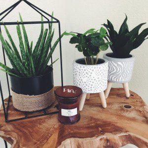 planten mamazetkoers