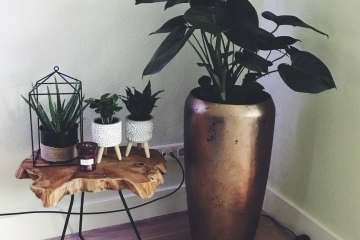 planten in grote vaas mamazetkoers