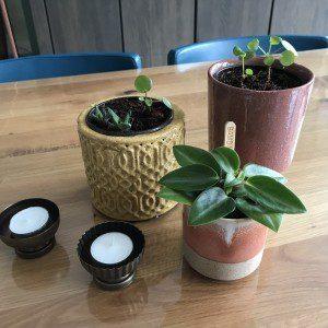 plantjes op tafel mamazetkoers