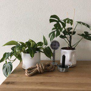 witte potten met planten mamazetkoers
