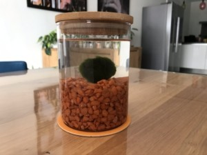 mamazetkoers review marimo in glas