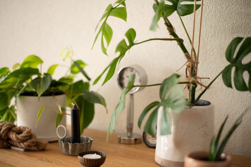 duurzaamheid, planten in huis mamazetkoers kleiner