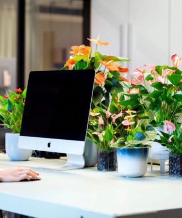 De ideale plant voor je (thuis)werkplek mamazetkoers Anthurium verzorgen